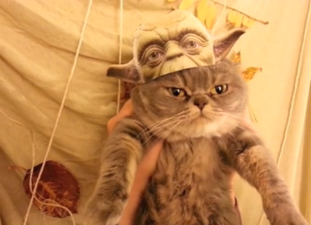 Yoda Cat