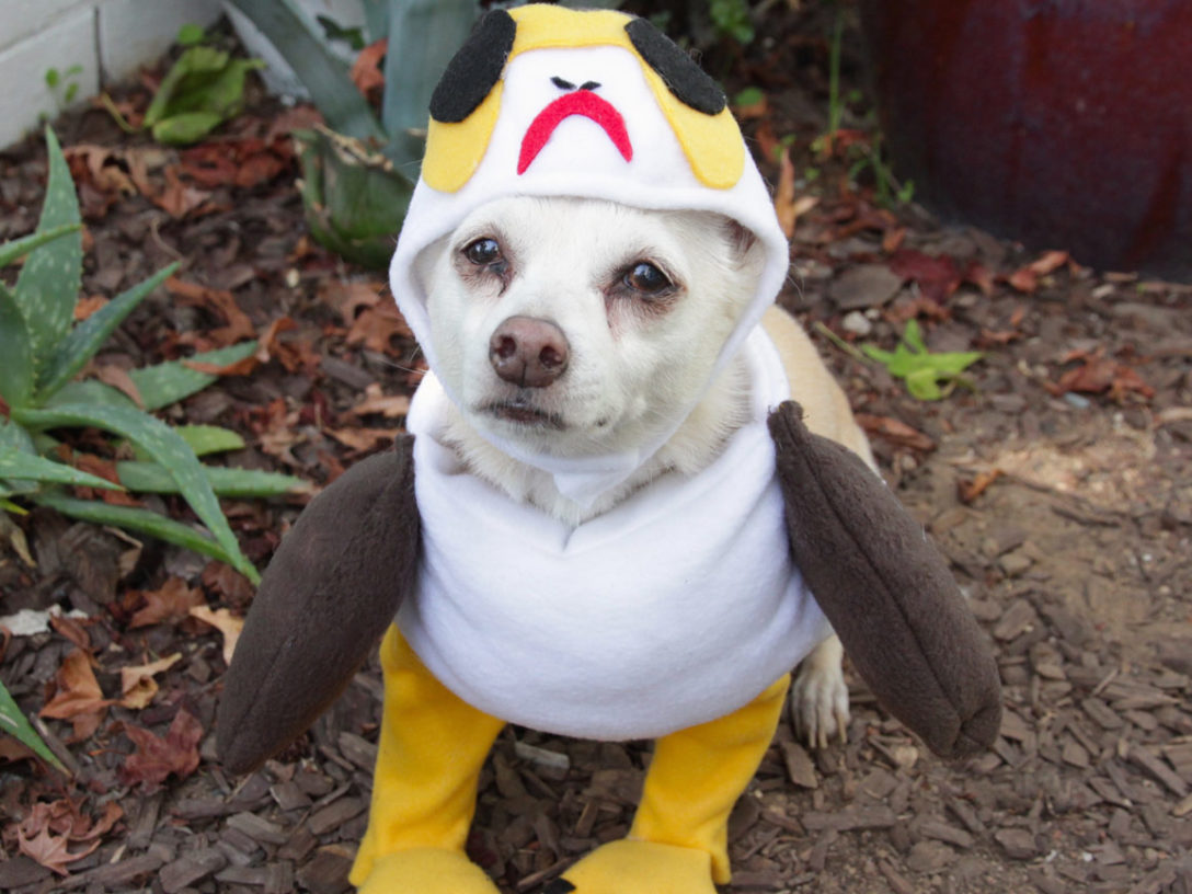 trickorstar wars treat dress your pet as a porg and more diy howloween costumes