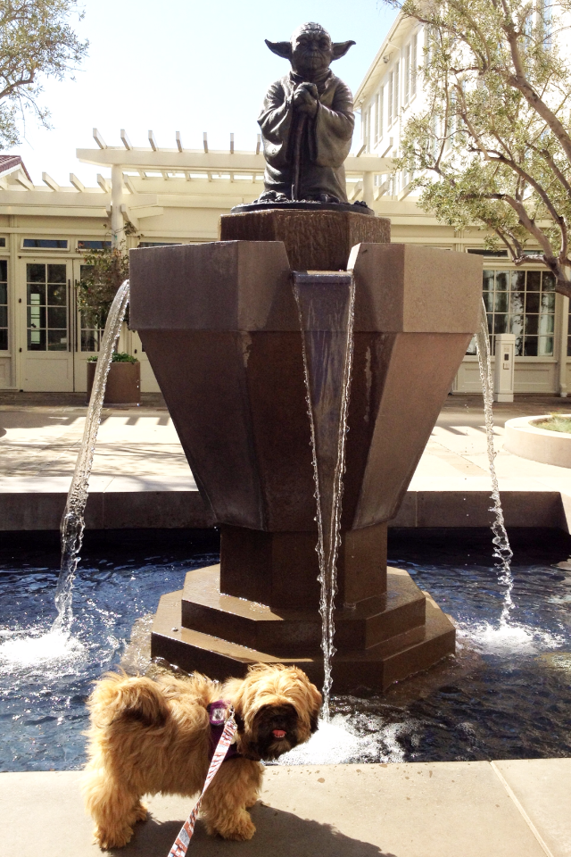 Chewie-dog-at-Yoda-fountain-LDAC