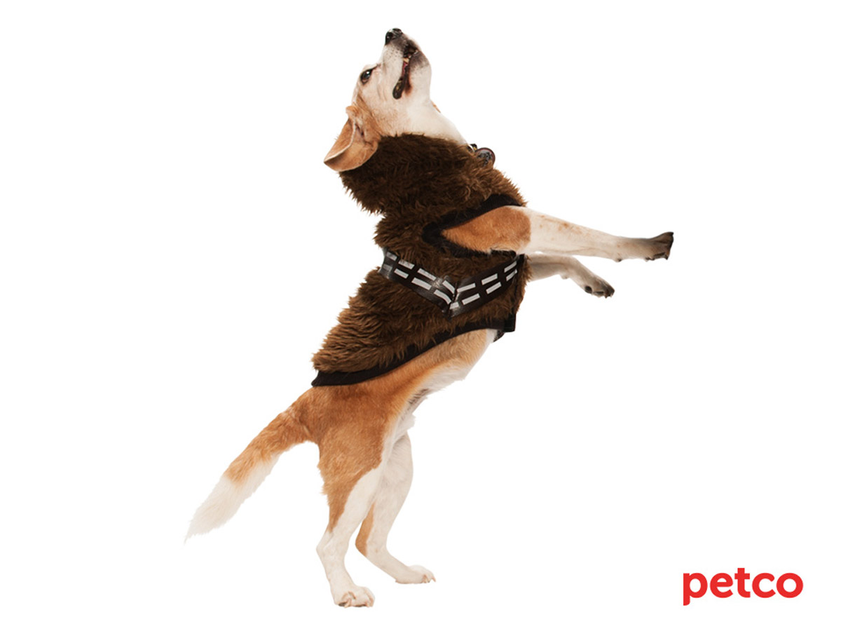 Petco S Star Wars Pet Fans Collection For Sith Tzus Jedi
