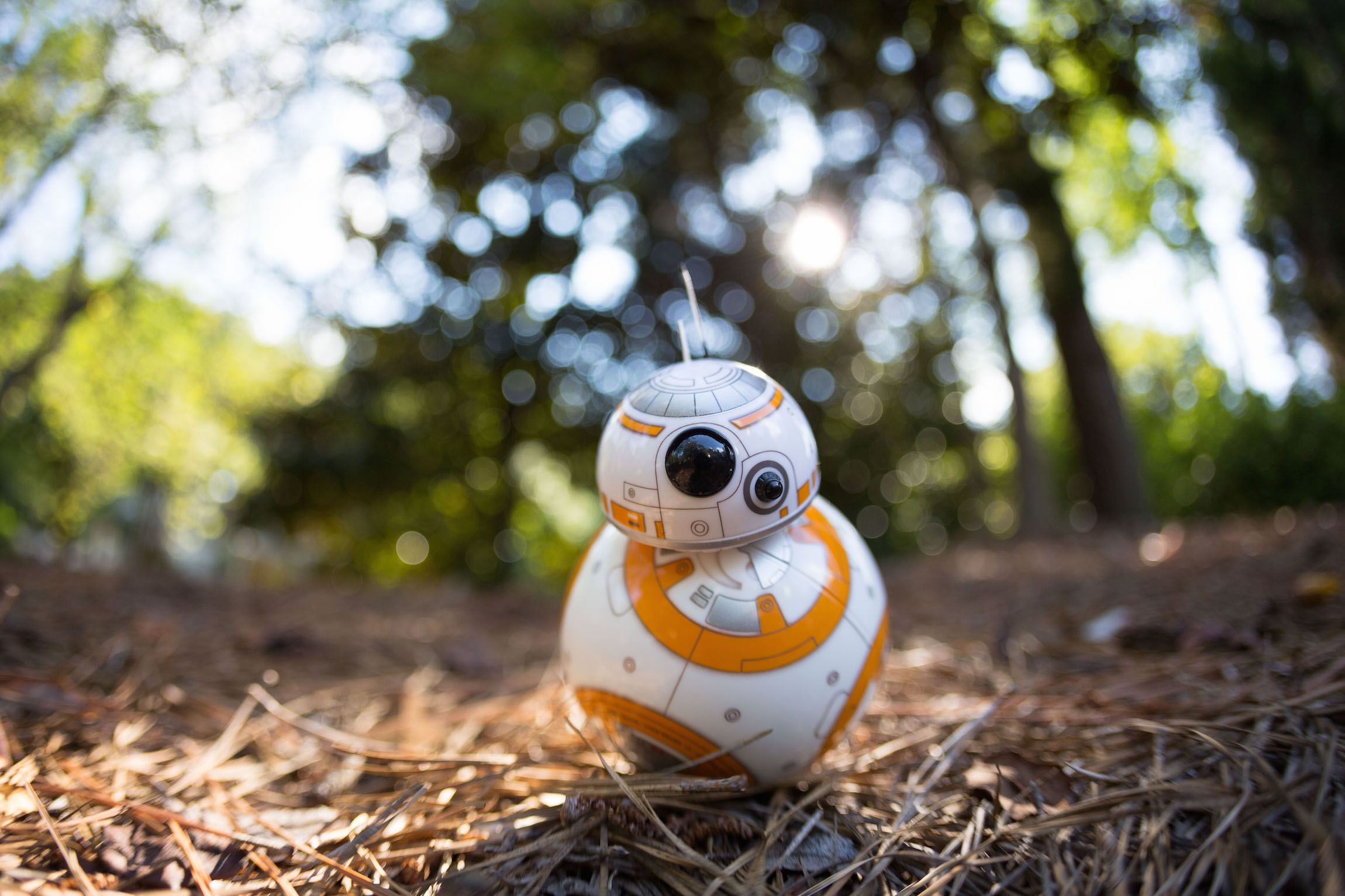 Sphero BB-8 in the thicket