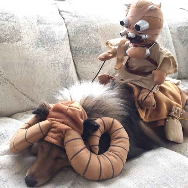 Mark Fujimoto made perfect use of his dogu0027s long fur by putting him in a bantha costume. Cooper looks very excited to be carrying a Tusken Raider across the ... & Pets in Star Wars Costumes Are the Best | StarWars.com
