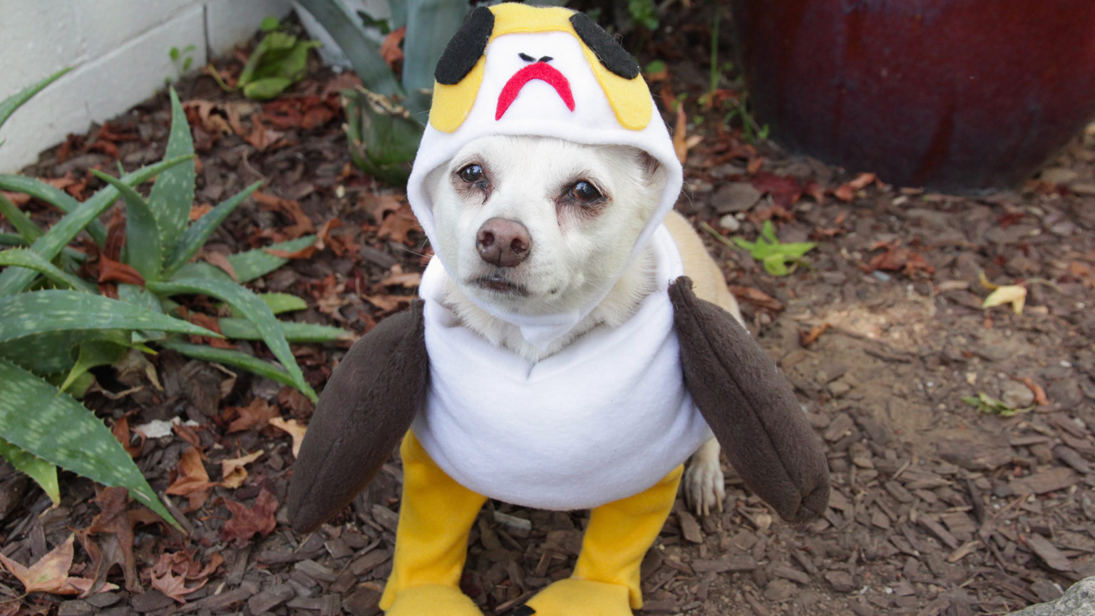 Creativity // OCTOBER 17 2017 & Porg and More DIY Star Wars Pet Costumes for Halloween | StarWars.com