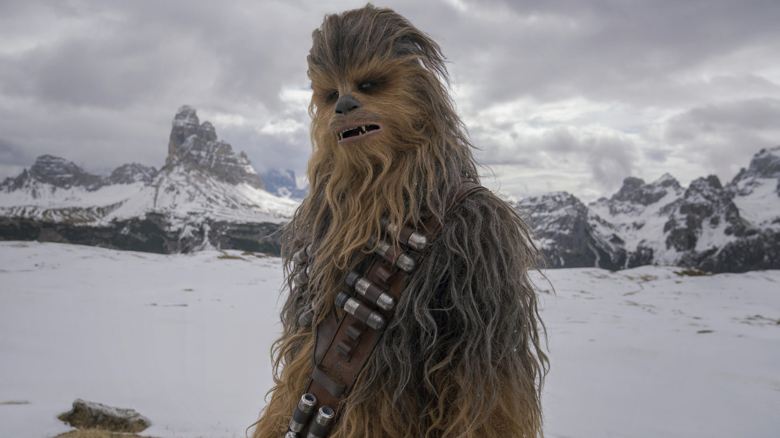 Quiz: What Percent Chewbacca Are You? | StarWars.com, Characters