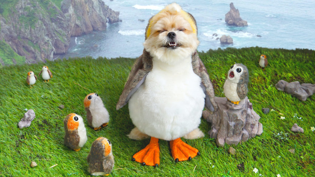 Star Wars Fan Awards 2018 winning photo of a dog dressed as a porg.