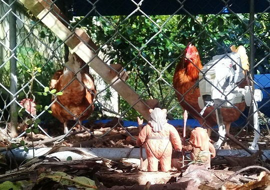 Star Wars Fan Awards 2018 winning photo of Ewok figures looking at a real chicken.
