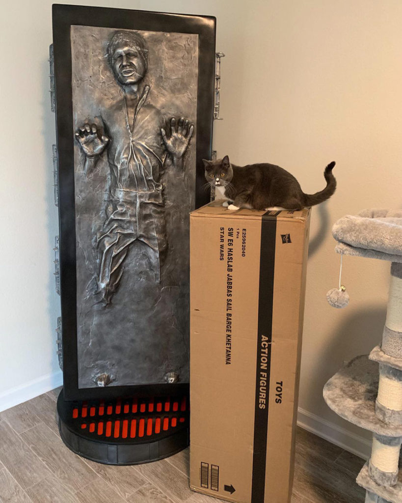Zack Ryder's cat Kylo with Han in carbonite.
