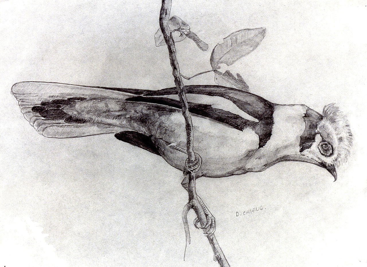 Sketch of a bird by a 13-year-old Doug Chiang.