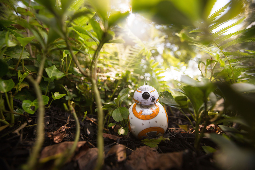 BB-8 Sphero in the lush