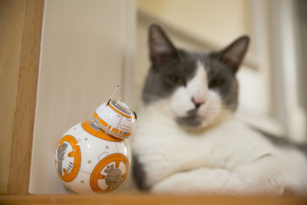 Sphero BB-8 with cat