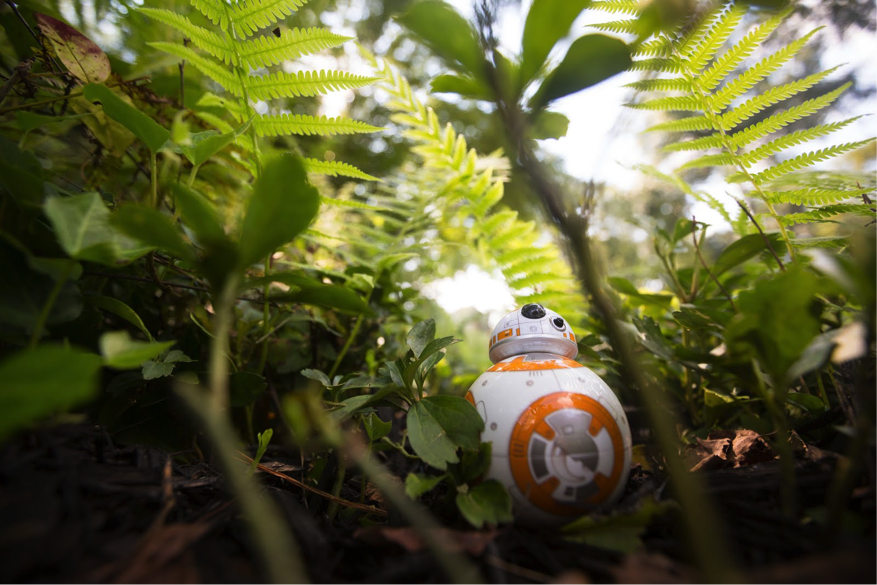 Sphero BB-8 in the lush