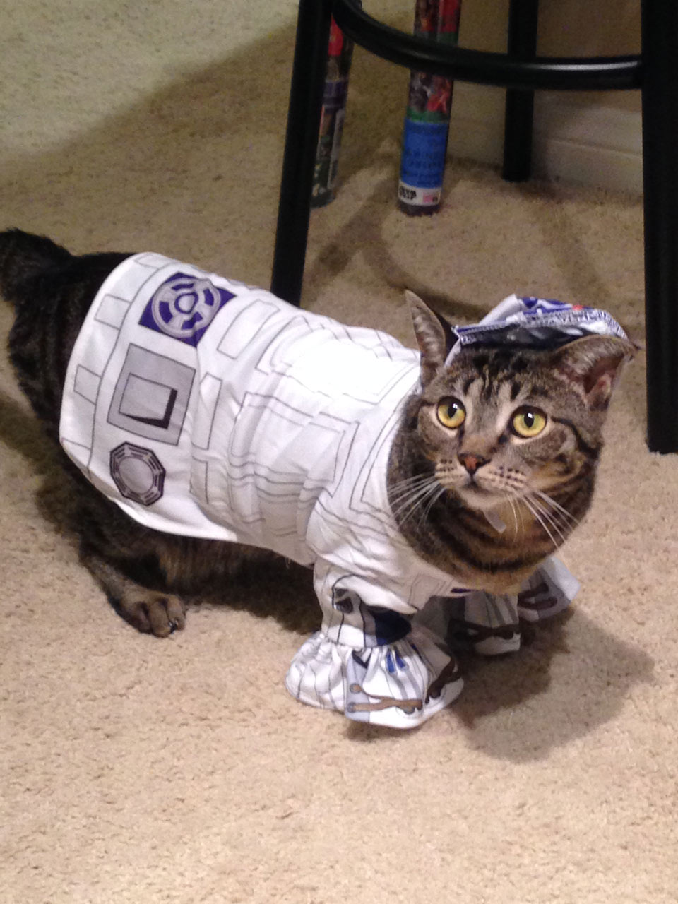 r2_beans_-_darrin & These Pets in Star Wars Costumes Are Ready for Halloween   StarWars.com