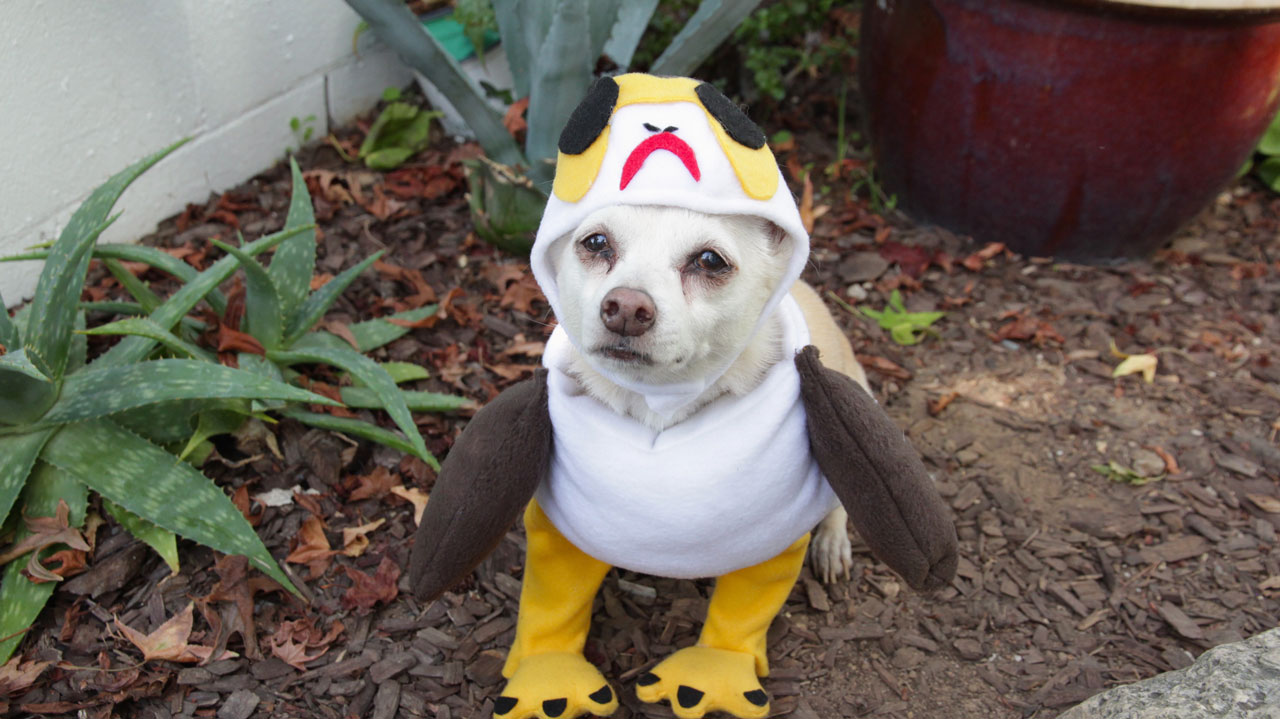 Halloween Costumes You Can Be With Your Dog